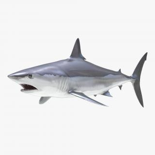 Shortfin Mako Shark 3D model