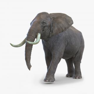 3D Elephant Walking Pose