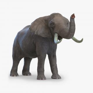 3D model Elephant Pose 3