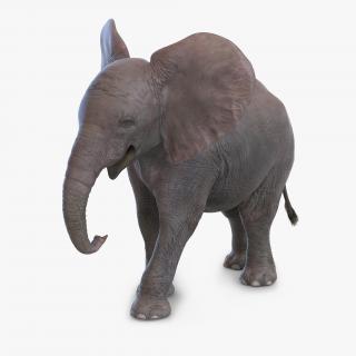 3D model Baby Elephant Pose 2