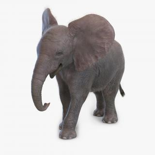 Baby Elephant Pose 2 with Fur 3D model