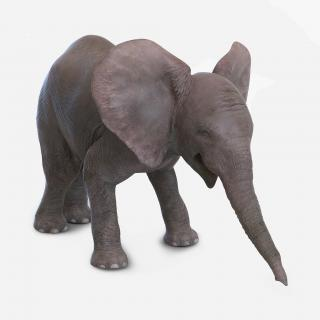 3D model Baby Elephant Pose 3