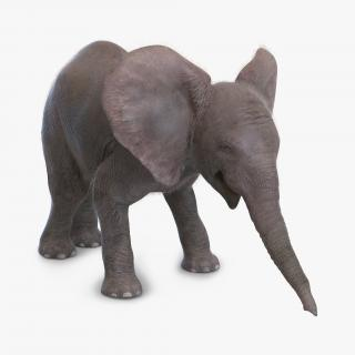 Baby Elephant Pose 3 with Fur 3D model
