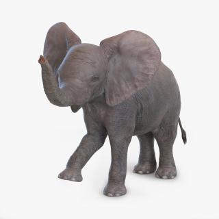 3D model Baby Elephant Rigged