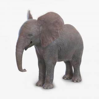 Baby Elephant with Fur 3D