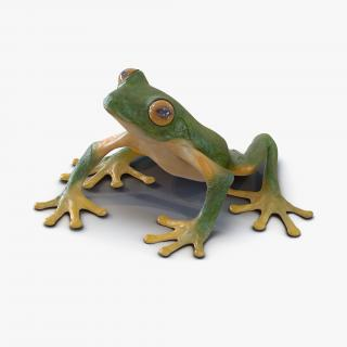 3D Tree Frog Rigged