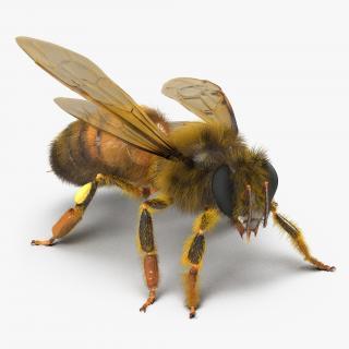3D model Bee Pose 2