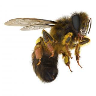 3D model Bee Pose 3