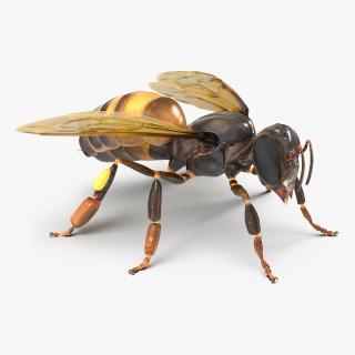 Honey Bee 3D model