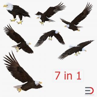 3D Bald Eagle Collection