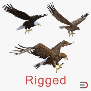 Rigged Eagles 3D Models Collection 3D model