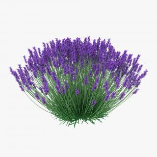 3D Lavender Bush model