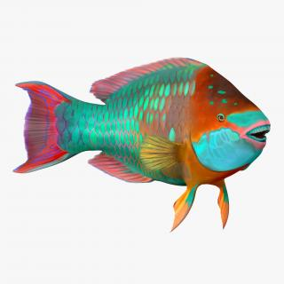 3D Rainbow Parrot Fish Rigged