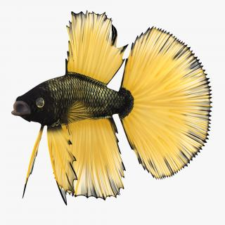Betta Fish Rigged 3D