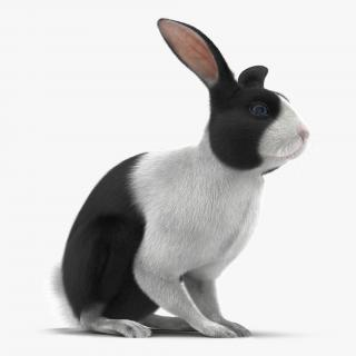 Black Rabbit Pose 3 3D model
