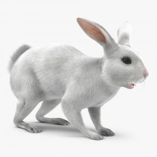 White Rabbit 3D
