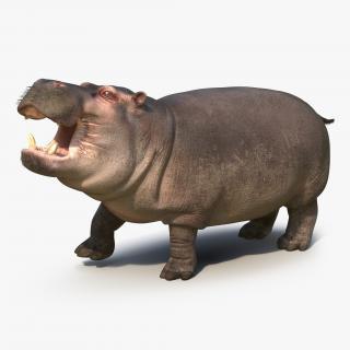 3D Hippopotamus Rigged with Fur model
