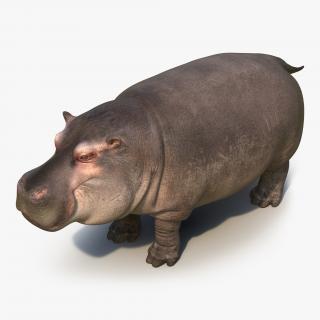 Hippopotamus 3D