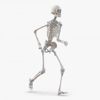 Human Male Skeleton Running Pose 3D
