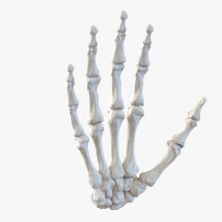 3D Human Hand Bones