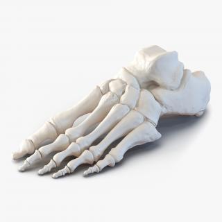 3D Human Foot Bones