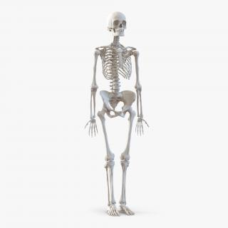 3D Human Female Skeleton