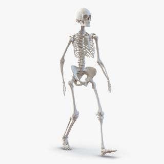 3D Human Female Skeleton Pose 3 model