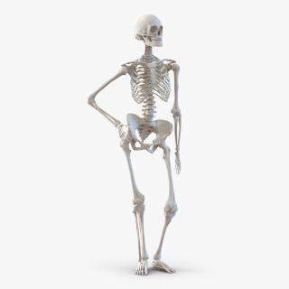 3D Human Female Skeleton Pose 2 model