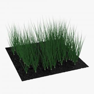 Young Onion Plants in the Garden 3D