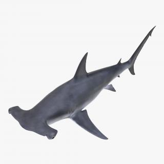 Great Hammerhead Shark 3D