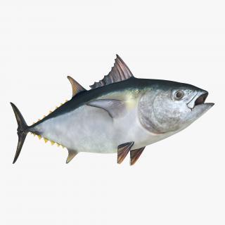 Tuna Fish 3D model