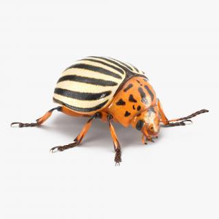 3D Colorado Potato Beetle Collection model