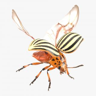 3D model Colorado Potato Beetle 2 with Fur Rigged