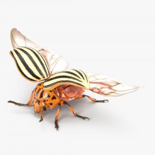 3D Colorado Potato Beetle 2 with Fur model