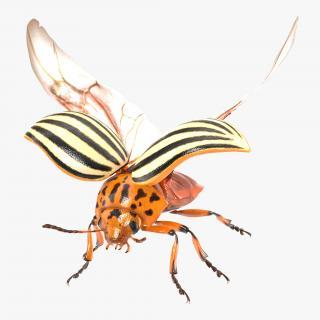 3D Colorado Potato Beetle 2 Rigged
