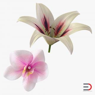 3D Flowers Collection model