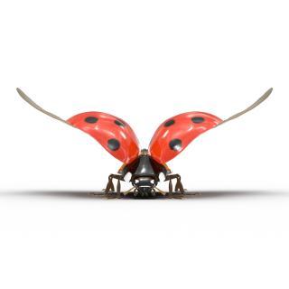 3D Flying Ladybug with Fur model