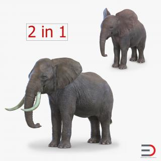 Elephants Collection 2 3D