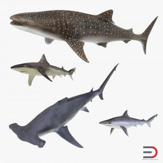 Sharks Collection 8 3D model