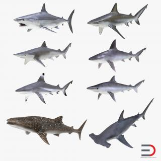 3D model Sharks Collection 10
