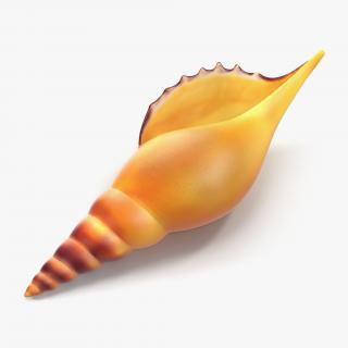 3D model Seashell