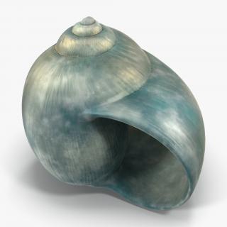 3D model Seashell 2