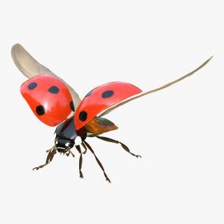 3D model Flying Ladybug with Fur Rigged