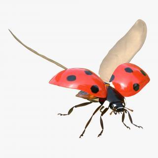 3D Flying Ladybug Rigged