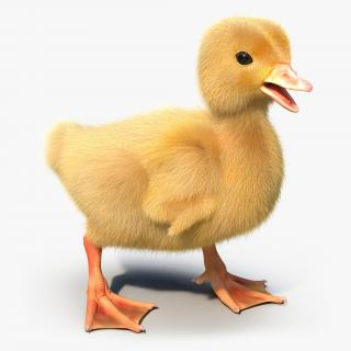 3D model Duckling Rigged