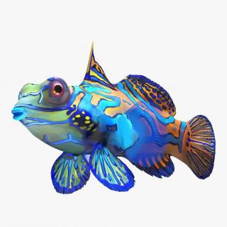Mandarinfish 3D