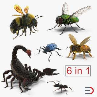 3D model Rigged Insects Collection