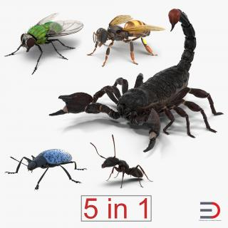 3D Insects Collection model