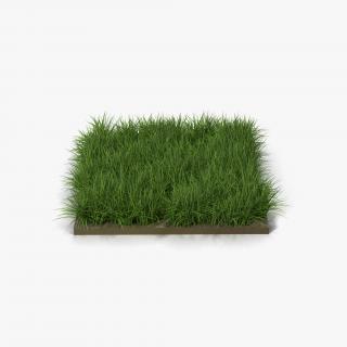 3D model Ryegrass