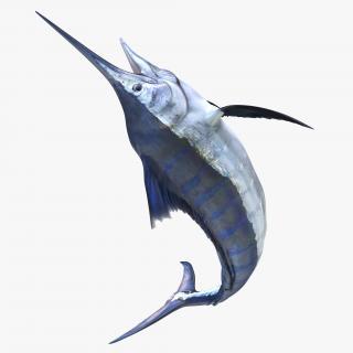3D Blue Marlin Rigged model